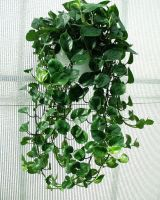 Marvelous Indoor Vines and Climbing Plants Decorations 46