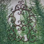Marvelous Indoor Vines and Climbing Plants Decorations 5