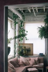 Marvelous Indoor Vines and Climbing Plants Decorations 56