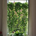 Marvelous Indoor Vines and Climbing Plants Decorations 57