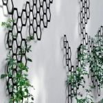 Marvelous Indoor Vines and Climbing Plants Decorations 62