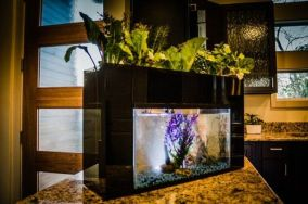 Mini Aquaponics with Fish for Home Decorations 10