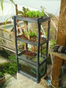 Mini Aquaponics with Fish for Home Decorations 17