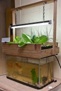 Mini Aquaponics with Fish for Home Decorations 19