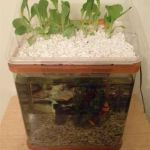 Mini Aquaponics with Fish for Home Decorations 26