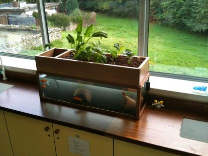 Mini Aquaponics with Fish for Home Decorations 27