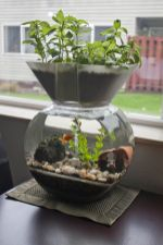 Mini Aquaponics with Fish for Home Decorations 32