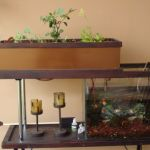Mini Aquaponics with Fish for Home Decorations 34
