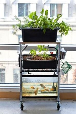 Mini Aquaponics with Fish for Home Decorations 35