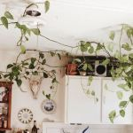 Vines and Climbing Plants for Indoor Decorations