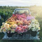 Beauty Flower Farm Which Will Make You Want to Have It 21