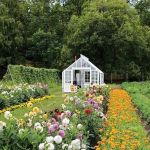 Beauty Flower Farm Which Will Make You Want to Have It 30
