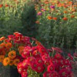 Beauty Flower Farm Which Will Make You Want to Have It 4