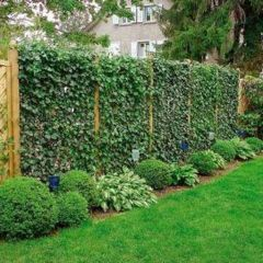 Cool Privacy Fence Wooden Design for Backyard 44