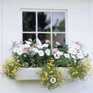 Perfect Shade Plants for Windows Boxes 21