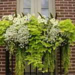 Perfect Shade Plants for Windows Boxes 24