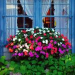 Perfect Shade Plants for Windows Boxes 25