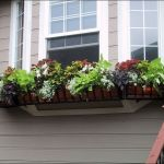 Perfect Shade Plants for Windows Boxes 26