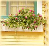 Perfect Shade Plants for Windows Boxes 27