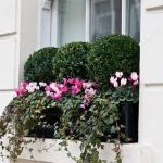 Perfect Shade Plants for Windows Boxes 36