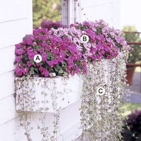 Perfect Shade Plants for Windows Boxes 37