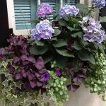 Perfect Shade Plants for Windows Boxes 42