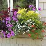 Perfect Shade Plants for Windows Boxes 43