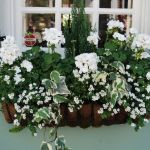 Perfect Shade Plants for Windows Boxes 45