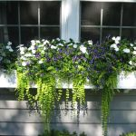 Perfect Shade Plants for Windows Boxes 47