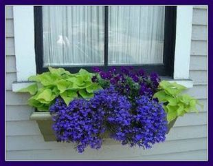 Perfect Shade Plants for Windows Boxes 48
