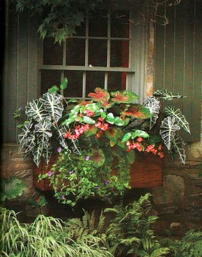 Perfect Shade Plants for Windows Boxes 49