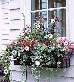 Perfect Shade Plants for Windows Boxes 55