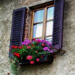Perfect Shade Plants for Windows Boxes 56