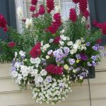 Perfect Shade Plants for Windows Boxes 59