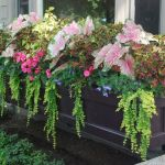 Perfect Shade Plants for Windows Boxes 68