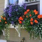 Perfect Shade Plants for Windows Boxes 72