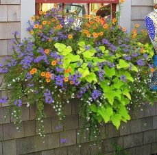 Perfect Shade Plants for Windows Boxes 82