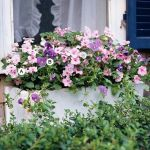 Perfect Shade Plants for Windows Boxes 9