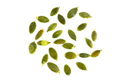 https://i2.wp.com/hooponopan.cl/wp-content/uploads/2017/07/bread_transparent_04.png?fit=250%2C165