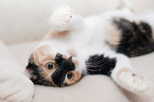 how to clean pet hair off furniture - Hooray for Moms