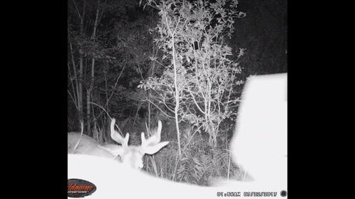 Trail camera buck hunting