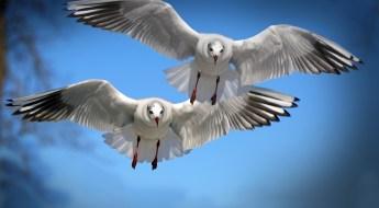 Two Birds Chirping
