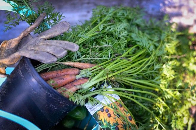 wpid-carrots2.jpg