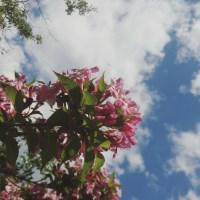 La vie en . . . Rose? ❤