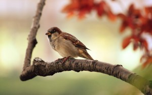You Are of More Value Than Many Sparrows