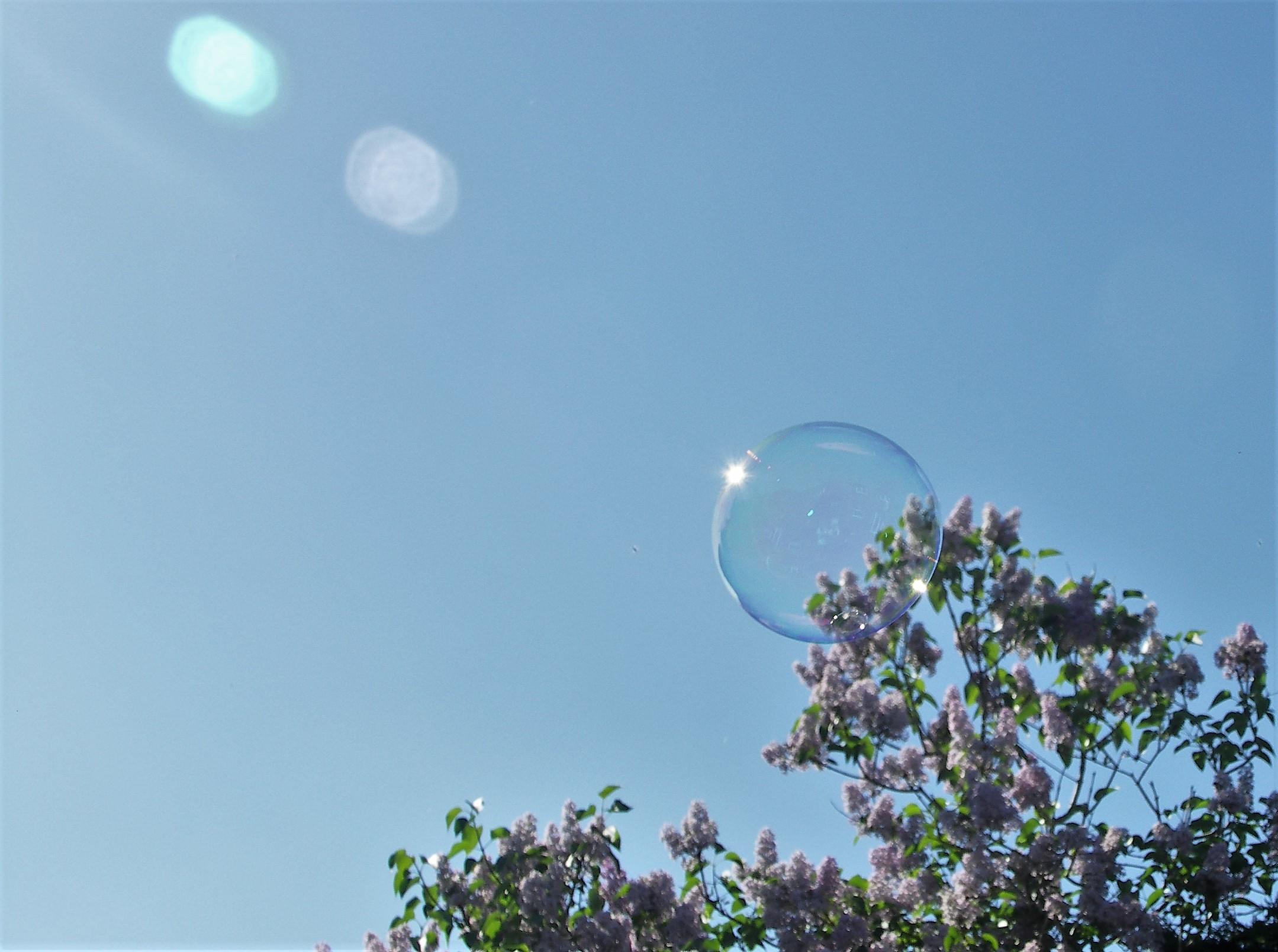 A bubble glinting in the sunlight