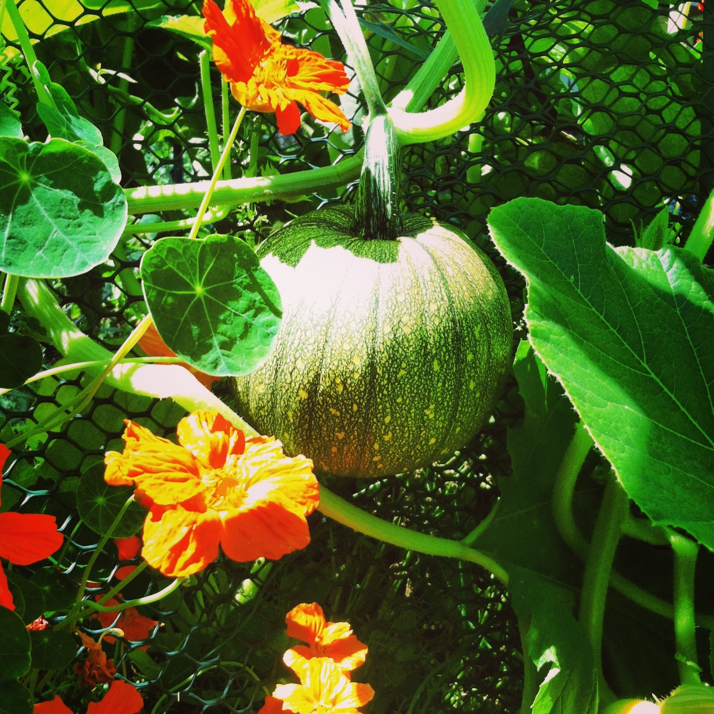 How To Grow The Perfect Pumpkin Patch Or Any Winter