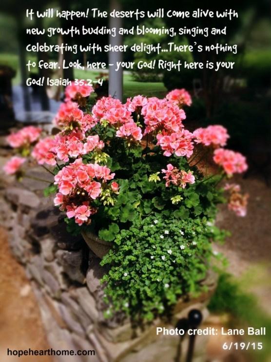 Geraniums Lane Isaiah 35_2
