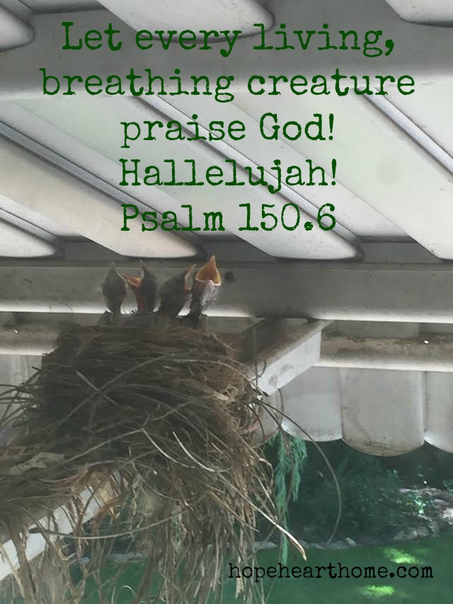 Quietude Psalm 150_6