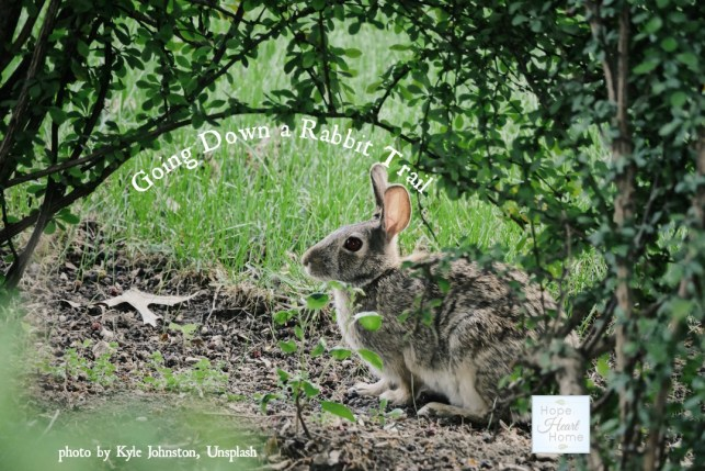 Let's Take a Rabbit Trail or 3